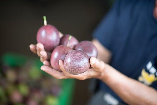 Taiwan, Farmer, Passion Fruit, Collect, Crop, Farm