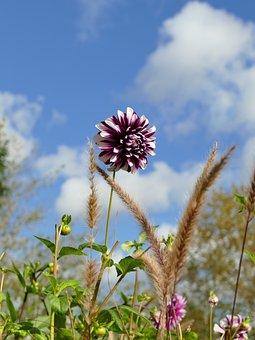 Autumn, Nature, Flower, Blossom, Bloom, Dahlia