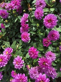 Flowers, Purple, Purple Flower, Purple Flowers, Floral