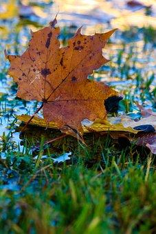 Leaf, Autumn, Puddle, Leaves, Color, Fall