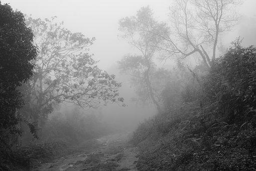 Moody, Path, Trail, Forest, Outdoor, Landscape, Scenery