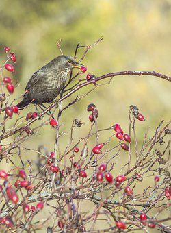 Bird, Nature, Birds, Animal, Forest, Animal World, Bill