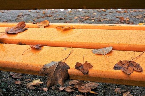 Bench, Yellow, Autumn, Foliage, Moisture, Drops, Park