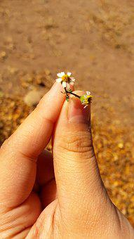 Flower, Hand, Nature, Mountain, Plant, Green, Forest