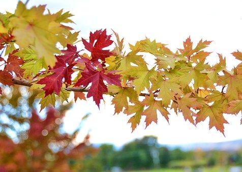 Fall, Autumn, Leaves, Yellow, Orange, Red, Tree