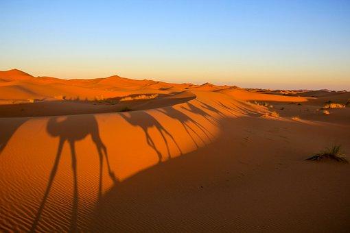 Morocco, Desert, Shadows, Camels, Landscape, Loneliness