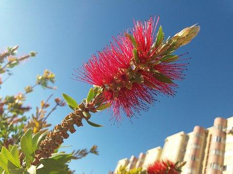 Red, Flower, Sky, Blue, Spring, Summer