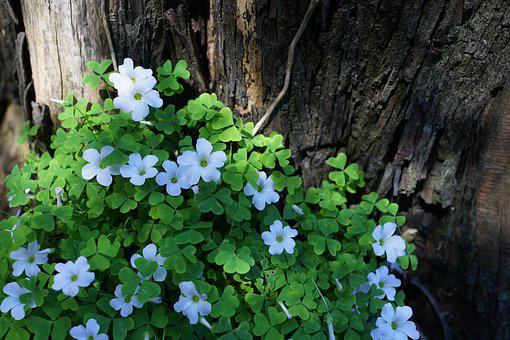 Native Flowers, South Australia, Tree Stump, Pathways