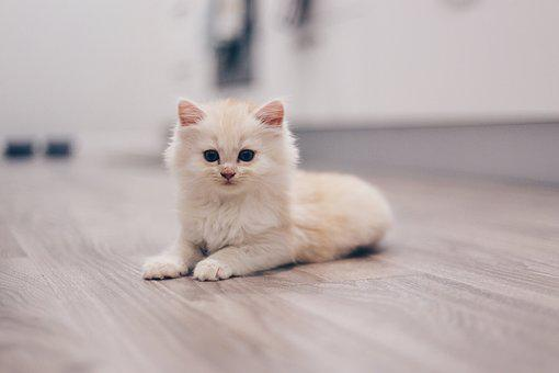 Cat, Kitten, Cute, Animal, Kitty, Feline, Adorable