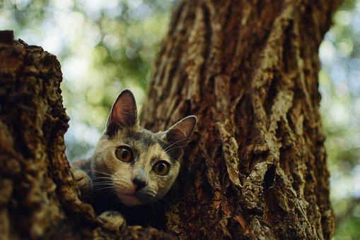 Cat, Animal, Pet, Feline, Kitten, Gata, Animals