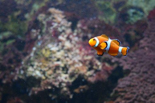 Aquarium, Marine, Water, Submarine, Nature, Ocean