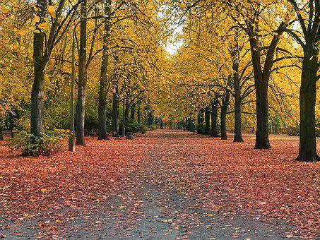 Autumn, Park, Alley, Yellow Leaves, Colors Of Autumn