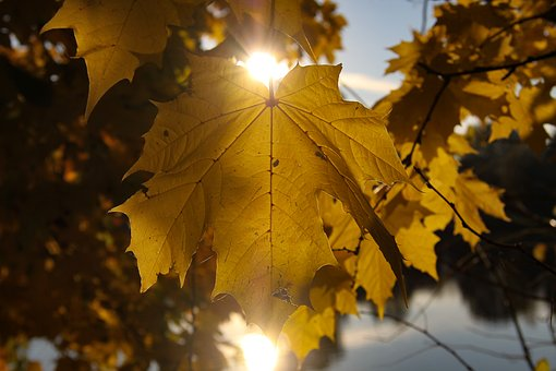 Autumn, Leaf, Sun, Golden Autumn, Transience