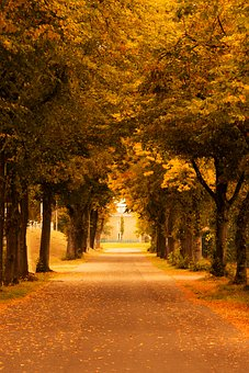 Autumn, Leaves, Mood, Fog, Trees, Berlin, Brown