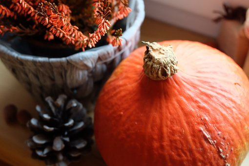Nature, Still Life, Pumpkin, Cone, Orange, Autumn