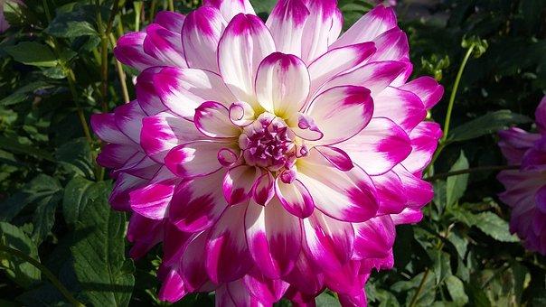 Flower, Summer, Beautiful Flower, Summer Plant, Nature