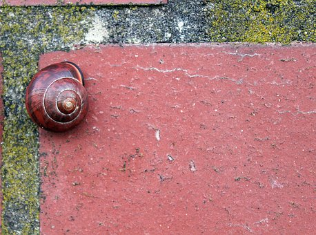 Brick, Snail, Brown, Red Brown, Fugue, Wall Stone