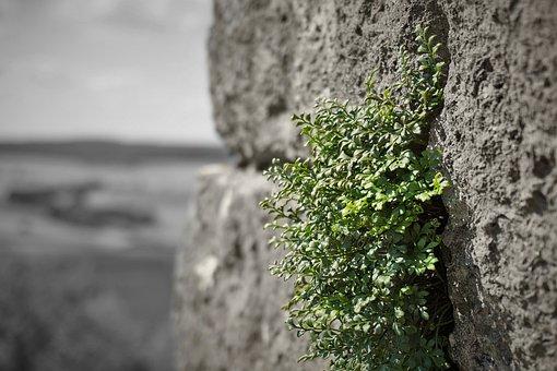 Wall, Green, Castle, Ruin, Stone Wall, Stones, Walls