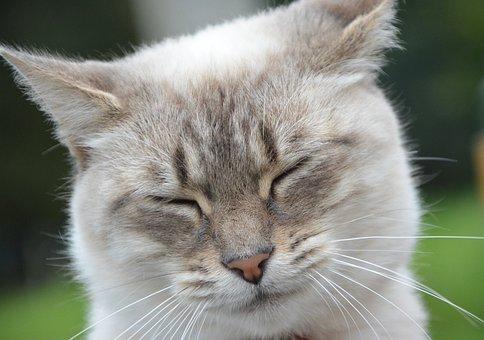 Cat, Kitten, Eyes Close, Close Your Eyes