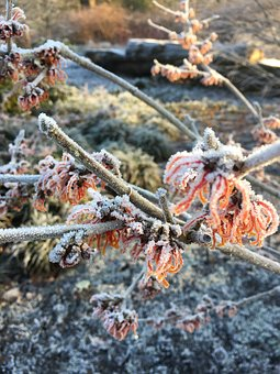 Winter, Frost, Nature, January, Ice, Weather, Frozen