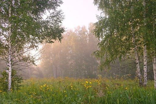 Birch, Summer, White, Forest, Green, Grove, Tree