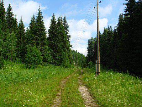 Forest, Road, Wake Up, The Way, Landscape, Nature