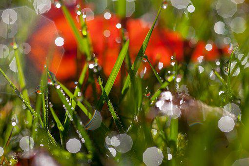 Grass, Water Drops, Morning, Light, Wet, Sunny, Green