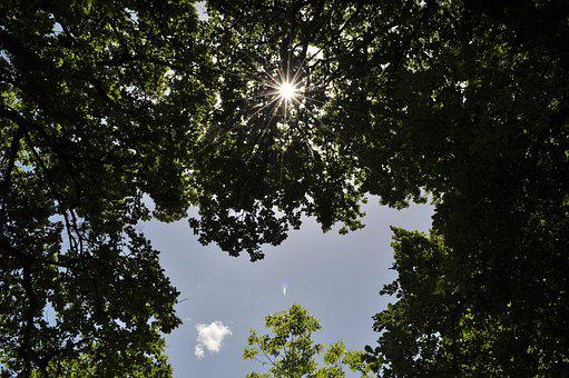 Rays Of The Sun, Nature, Atmosphere, Sky, Light, Trees