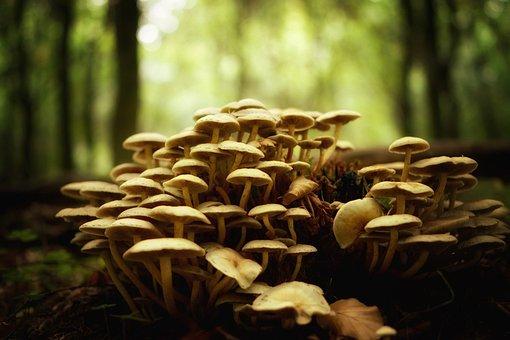 Mushrooms, Forest, Nature, Autumn, Mushroom Picking