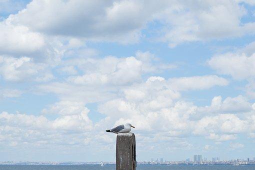 Seagull, Bird, Landscape, Clouds, Blue, Birds, Nature