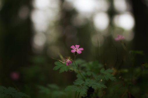 Forest, Flower, Nature, Close, Macro, Flowers