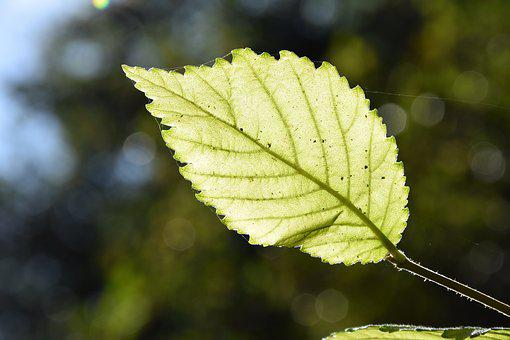 Leaf, Tree, Nature, Green, Autumn, Macro, Green Tree