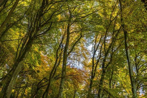Canopy, Autumn, Farbenpracht, Beautiful, Nature, Idyll