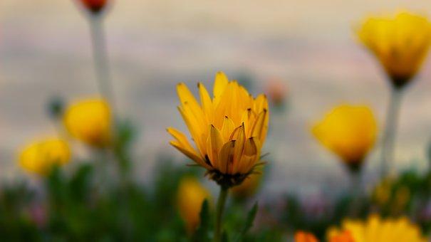 Flower, Macro, Floral, Blossom, Nature, Spring, Garden