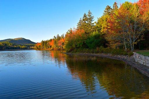 Lake, Trees, Foliage, Wall, Reflection, Nature
