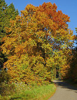 Autumn Beech, Mixed Forest, Sauerland, Northern Bright