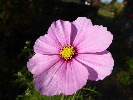 Violet, Purple Flower, Violet Flower, Flower Purple