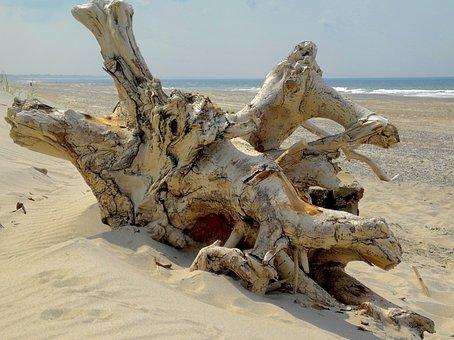 Root, Drift Wood, Beach, Nature, Landscape