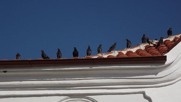 Pigeon, Pigeons, Roof, Birds, Sky, Roof Tiles, Church