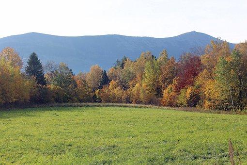 Autumn, Landscape, Colors, Nature, Tree