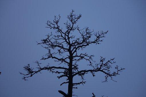 Dead Tree, Tree, Trunk, Branch, Nature, Tree Trunks