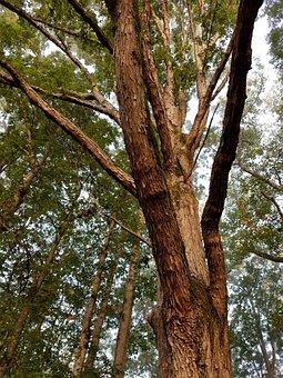 Tree, Wood, Nature, Landscape, Trunk, Environment, Bark