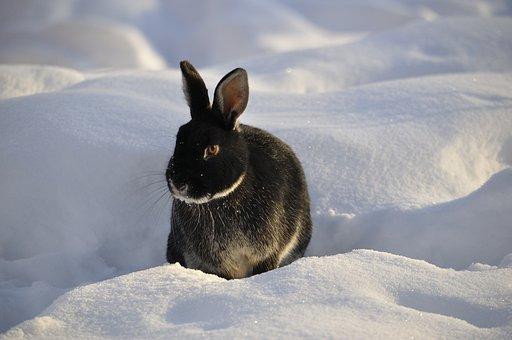 Rabbit, Winter, Snow, Animal, Cute, Hare, Nature
