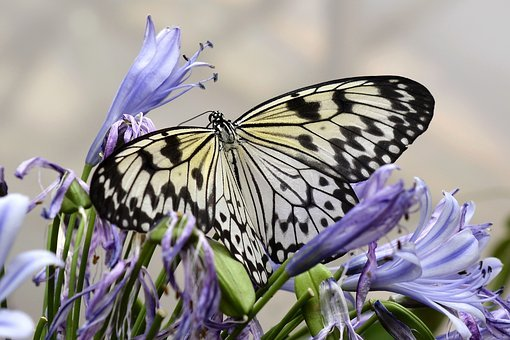 Butterfly, Insect, Wing, Fly, Animal, Black, Yellow