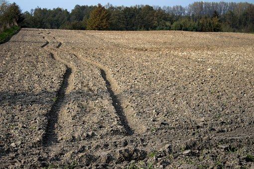 Way, Field, Traces, Nature, Autumn, Poland