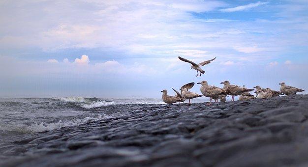 Gulls, North Sea, Bird, Sky, Coast, Flight, Nature