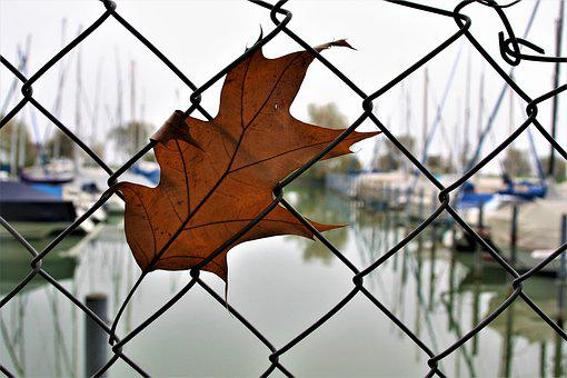 The Moat, Wire, Fencing, Dry Leaves, Collapse, October
