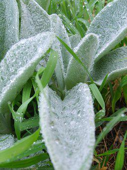 Water, Drop, Water Drop, Rain, Dew, Morning Dew, Herbs