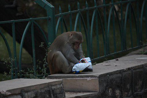 Monkey, Eating, Food
