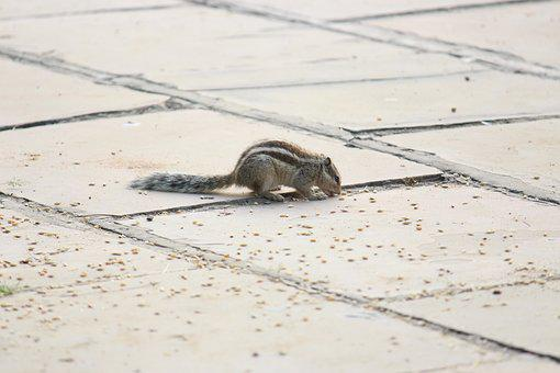 Squirrel, Eating, Wildlife
